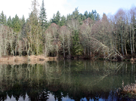 64 Acres on Eagle Creek with Large Pond