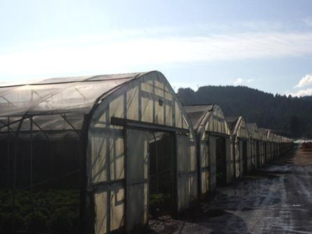 Row of Greenhouses on Irrigated Thatcher Farm